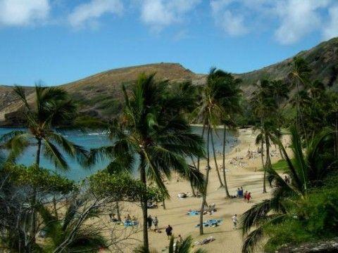 Hanauma Bay: von Palmen gesäumt