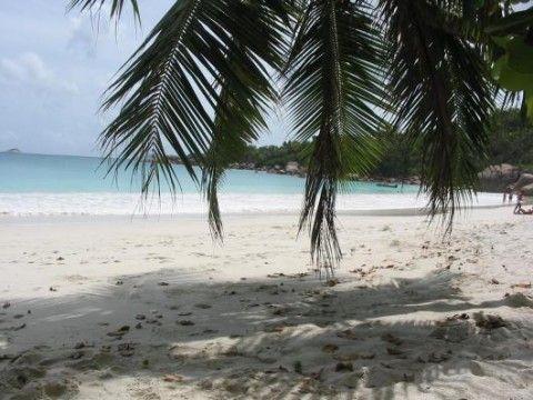 Palmen säumen das Ufer des Anse Lazio