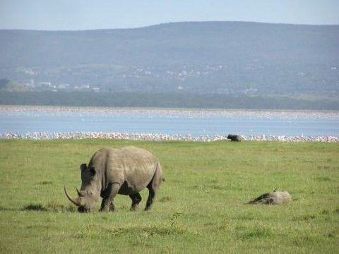 Lake Nakuru National Park (Veduta esterna)