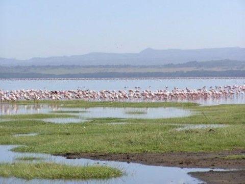 Lake Nakuru National Park (Dintorni)