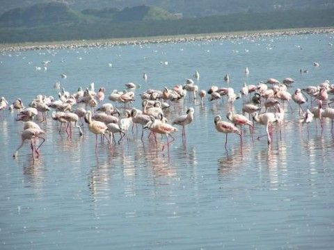 Lake Nakuru National Park (Veduta interna)