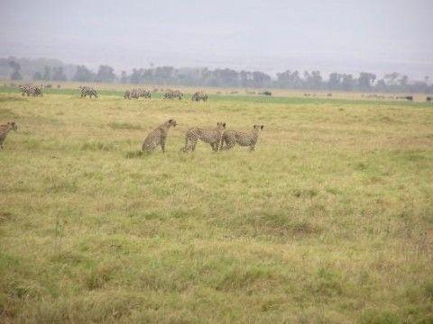 Amboseli National Park (Veduta)