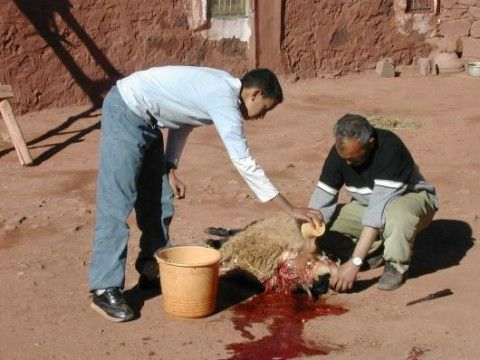 Voyage au Maroc 671791_l