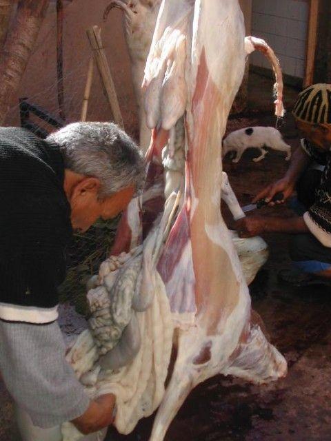 Voyage au Maroc 673106_l