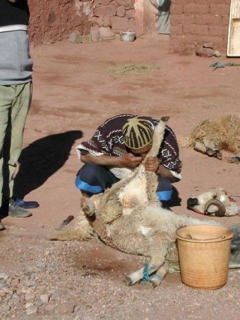 Voyage au Maroc 673116_l