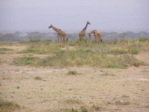 Amboseli National Park (Veduta esterna)