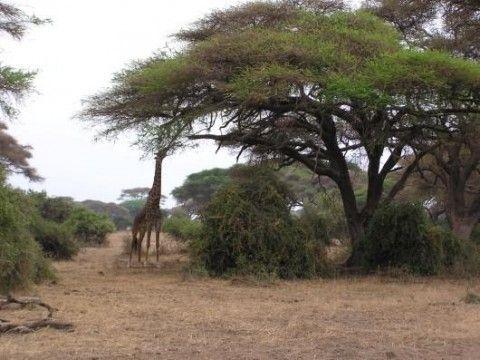 Tsavo West National Park (Dettaglio)